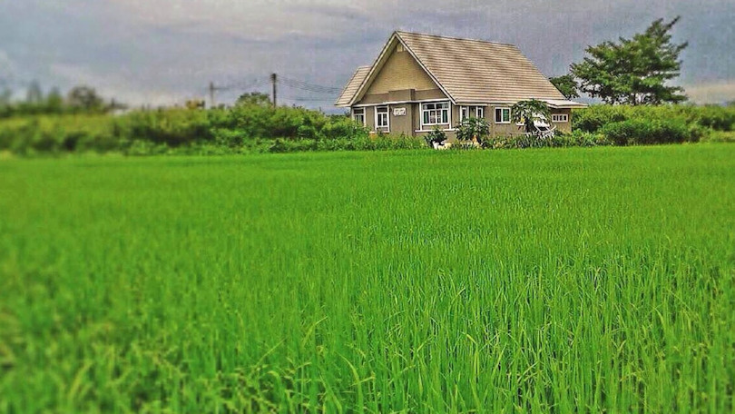house for sale in doi saket - rice field view